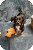 Dachshund Mix Puppy for adoption in Homewood, Alabama - Mikey