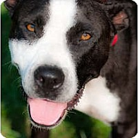 Adopt A Pet :: Lulu - Courtesy Post - Cincinnati, OH