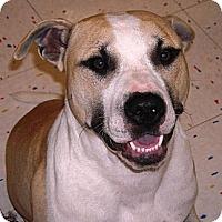 Adopt A Pet :: Teddy - Beaumont, TX