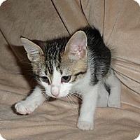 Adopt A Pet :: Khloe - Norwich, NY