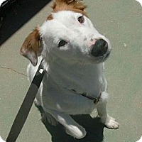 Adopt A Pet :: Ivory - Only $55 adoption fee! - Litchfield Park, AZ