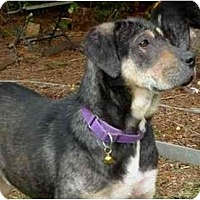 Adopt A Pet :: Riley - Seattle, WA