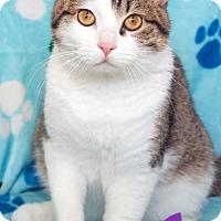 Adopt A Pet :: Simon - St Louis, MO