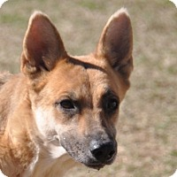 Adopt A Pet :: Princess Leia - Dripping Springs, TX