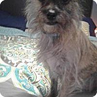 Adopt A Pet :: Larry - Albertville, MN