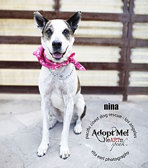 Australian Cattle Dog Mix Dog for adoption in Marina del Rey, California - Nina