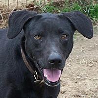 Adopt A Pet :: Gabrielle - Conway, AR