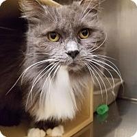 Adopt A Pet :: Miss Daisy - Fresno CA, CA