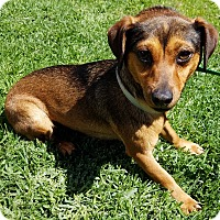 Adopt A Pet :: Isabel - Los Angeles, CA
