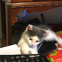 Adopt A Pet :: Diego - Covington, KY