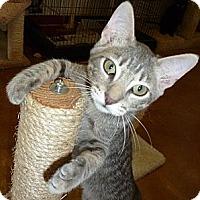 Adopt A Pet :: Willie, II - Lake Charles, LA