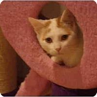 Adopt A Pet :: Andrew - Muncie, IN