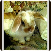 Adopt A Pet :: Wally - Williston, FL
