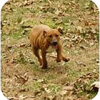 Adopt A Pet :: Pixie - Staunton, VA