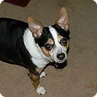 Adopt A Pet :: Buddy - Commerce City, CO