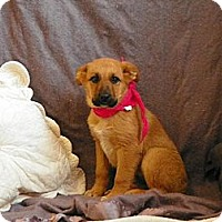 Adopt A Pet :: Bubbles - Roosevelt, UT
