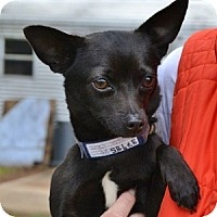 Adopt A Pet :: Spanky - Athens, GA