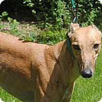 Adopt A Pet :: Manage - Canadensis, PA