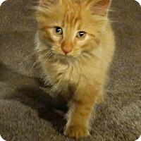 Adopt A Pet :: Walter - Florence, KY