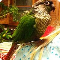 Adopt A Pet :: Jerry - Lenexa, KS