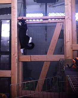 Domestic Mediumhair Kitten for adoption in Midway City, California - Scarlett
