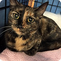 Adopt A Pet :: Trixie - Frederick, MD