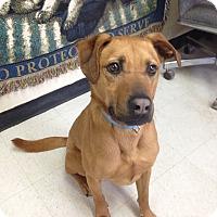 Adopt A Pet :: Coco - Willington, CT