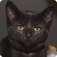 Adopt A Pet :: Locket - Medina, OH
