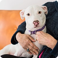 Adopt A Pet :: Carly B - Knoxville, TN