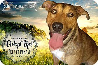 German Shepherd Dog Mix Dog for adoption in West Hartford, Connecticut - Eddie