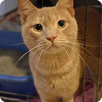 Adopt A Pet :: Reese - Columbia, MD