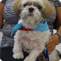 Adopt A Pet :: BUDDYpending - Eden Prairie, MN