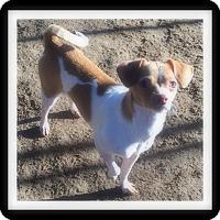 Adopt A Pet :: MILA - Winchester, CA