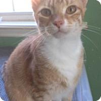 Adopt A Pet :: SUNSHINE - Washington, NC