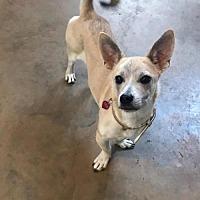 Adopt A Pet :: Bayleef - Longview, TX