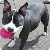 Adopt A Pet :: COCOA - Clayton, NJ