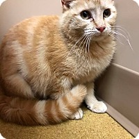 Adopt A Pet :: Orian - Maryville, MO