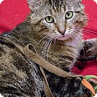 Adopt A Pet :: Tuffers - Chicago, IL