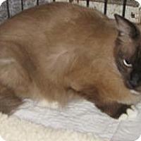 Adopt A Pet :: Gracie - Dallas, TX