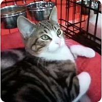 Adopt A Pet :: Yio - lake elsinore, CA