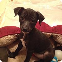 Adopt A Pet :: Tara -  Adoption Pending - Gig Harbor, WA