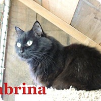 Adopt A Pet :: Sabrina - Waynesville, NC