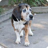 Adopt A Pet :: Lulu - Folsom, LA