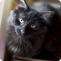 Adopt A Pet :: Raider - Chicago, IL
