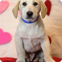 Adopt A Pet :: Jager - Waldorf, MD