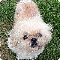 Adopt A Pet :: Mable - Terrell, TX