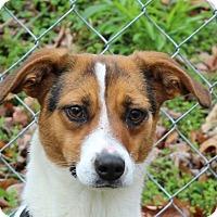 Adopt A Pet :: Chloe - Spring Valley, NY