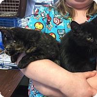 Adopt A Pet :: Fonzie & Pinky - Windsor, CT