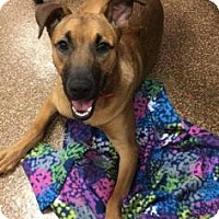 Adopt A Pet :: Hazel - Chicago Heights, IL