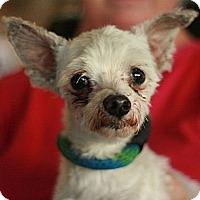 Adopt A Pet :: Gunner - Canoga Park, CA